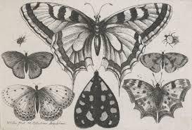 Blog 2 Te Papa U0027s Blog Help Us Identify Some 17th Century Butterflies
