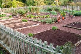 which vegetables are most efficient bonnie plants