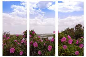 floral nature cape cod salt marsh triptych photographic print on