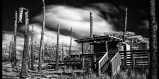 dead island bungalow 26 bungalow santa monica
