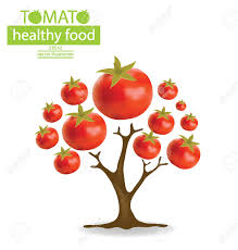 tomato tree vector illustration royalty free cliparts vectors