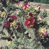 Botanical Gardens Grand Junction Western Colorado Botanical Gardens 22 Photos Museums 641