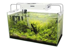best led light for planted tank how to prepare a planted tank for the college life planted tank source