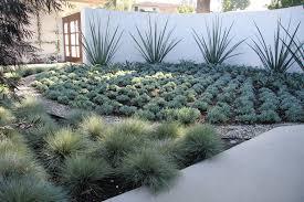 plants for desert landscaping ideas u2014 home design ideas beauty