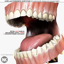 anatomy of teeth and gums image collections learn human anatomy