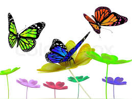 butterfly and flowers on white background stock photo colourbox