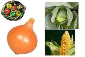 the 5 fundamental rules of crop rotation in your veg garden