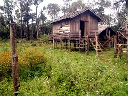 free images tree forest farm house hut village shack