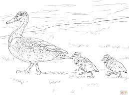 duck ducklings walking coloring free printable coloring