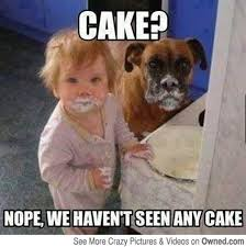 Eating Meme - cake nope we haven t seen any cake funny eating meme picture