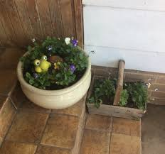 Turtle Planter Weeds An All Slugs And Snails Successes And Fails That U0027s What