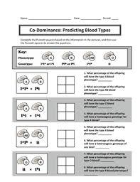 codominance punnett square worksheet free worksheets library