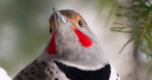 Audubon Backyard Bird Count by 2016 Great Backyard Bird Count Needs Birders Montana Audubon