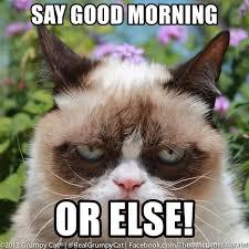 Good Morning Cat Meme - say good morning or else grump cat bitch meme generator
