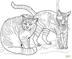 andean mountain wildcat coloring page free printable coloring pages