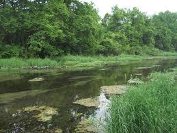 Pennsylvania vegetaion images Spring creek fishing pennsylvania usa fly fishing forums jpg