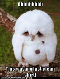 Memes Clean - animal capshunz clean funny animal pictures with captions