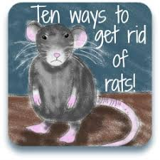 How Do You Get Rid Of Possums In The Backyard by Rats Mice And How To Keep Them Away From Your Chickens