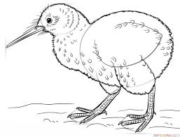 draw kiwi bird step step drawing tutorials