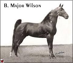 tennessee walking horse major wilson 530658