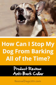 how to train dog to stop barking how can i stop my dog from barking all of the time rescue dogs 101