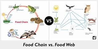 what travels through a food chain or web images Difference between food chain and food web jpg