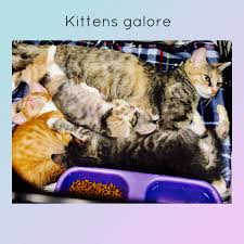 Kittens Galore Jpg