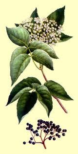 Glosario y propiedades mágicas de las plantas Images?q=tbn:ANd9GcSOyDHxlj1TxK3rvap8ut6mRQXrGHBUlbQjKkvFZLgU9SJu3FVDaQ