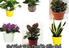 Indoor Plant For Office Desk Super Idea Plants For Office Desk Delightful Design 9 Low Home