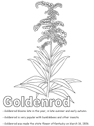 goldenrod coloring page