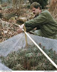 How To Wrap A Tree In Lights Shelter Plants From Winter U0027s Worst Fine Gardening
