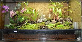 forums de jardinage u2022 afficher le sujet mon terrarium