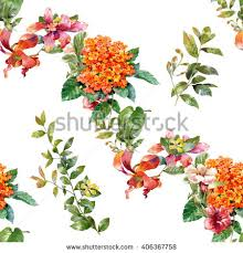 tropical garden flowers stock images royalty free images