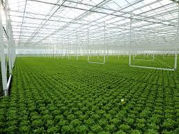 serre horticole en verre projets complets horticoles sous serre horconex