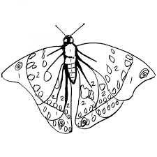 sasakia charonda butterfly colouring page for to print