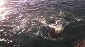 pier 1 restaurant freeport bahamas shark feeding youtube