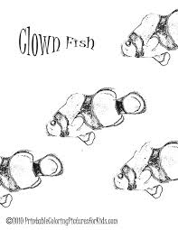 free clown fish coloring pages printable printable coloring