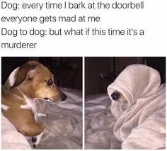 Best Dog Memes - dog memes are the best tumblr