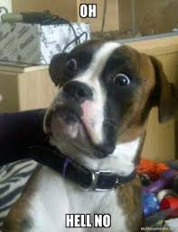 Hell No Meme - oh hell no skeptical dog make a meme