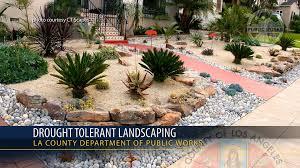 drought tolerant backyard designs backyard landscape design