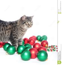cute tabby kitten playing with christmas ornaments royalty free