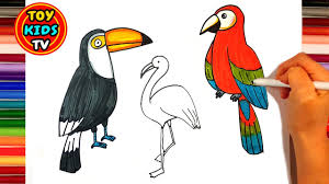 how to draw a bird parrot flamingo toucan peacock learn