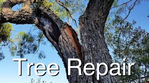 tree repair how i saved two great trees
