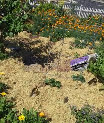 vegetable gardening from dirt to dinner