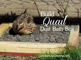 Raising Quail Backyard Are Your Coturnix Quail Flipping Their Feed Crumble Build Them A