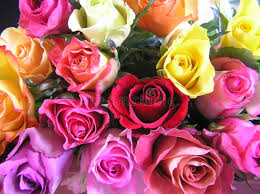 multicolored roses display of multicolored roses stock photos image 146443
