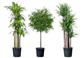 good low light plants low light house plant incredible plant wonderful hardy indoor plants