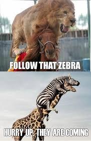 Drunk Giraffe Meme - 20 funny zebra meme pictures of all the time