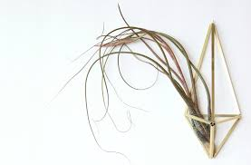 Wall Plant Holders Making A Himmeli Air Plant Holder U2013 Green Obsessions