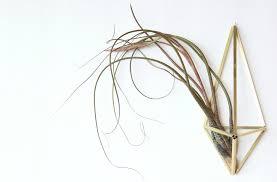 making a himmeli air plant holder u2013 green obsessions
